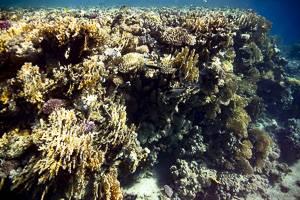 reef -